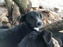 JANA, Hund, Border Collie-Mix in Werl - Bild 53
