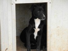 JANA, Hund, Border Collie-Mix in Werl - Bild 54
