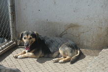 ELENA, Hund, Dackel-Mix in Bulgarien - Bild 6