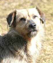 USCHI, Hund, Terrier-Mix in Gefrees - Bild 1