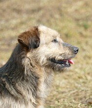 USCHI, Hund, Terrier-Mix in Gefrees - Bild 4
