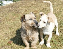 USCHI, Hund, Terrier-Mix in Gefrees - Bild 5