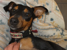 SARA, Hund, Pinscher-Mix in Spanien - Bild 15