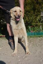 SMILEY, Hund, Mischlingshund in Ungarn - Bild 6
