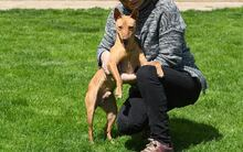 RAMIRO, Hund, Podenco-Pinscher-Mix in Spanien - Bild 10