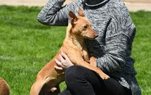 RAMIRO, Hund, Podenco-Pinscher-Mix in Spanien - Bild 18