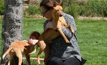 RAMIRO, Hund, Podenco-Pinscher-Mix in Spanien - Bild 7