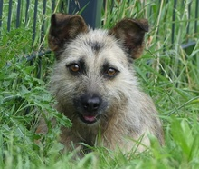 FLOR, Hund, Terrier-Mix in Portugal - Bild 1