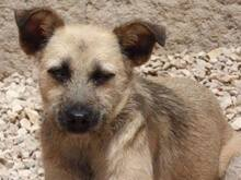 FLOR, Hund, Terrier-Mix in Portugal - Bild 6