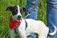 COOKIE, Hund, Jack Russell Terrier-Mix in Moers - Bild 4