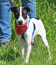 COOKIE, Hund, Jack Russell Terrier-Mix in Moers - Bild 6