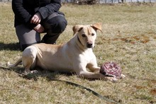 LOTTE, Hund, Labrador-Mix in Neuhausen - Bild 5
