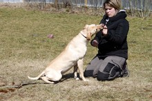 LOTTE, Hund, Labrador-Mix in Neuhausen - Bild 6