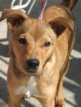 TONO, Hund, Pinscher-Mix in Spanien