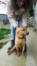 ATILLA, Hund, Pinscher-Mix in Italien - Bild 2
