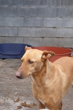 BILLY, Hund, Podenco in Spanien - Bild 7