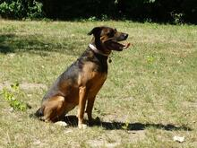 DIAMOND, Hund, Malinois in Speyer - Bild 10