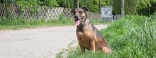 DIAMOND, Hund, Malinois in Speyer - Bild 11