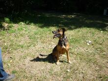 DIAMOND, Hund, Malinois in Speyer - Bild 4