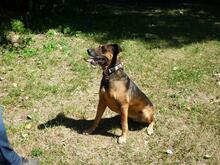 DIAMOND, Hund, Malinois in Speyer - Bild 7