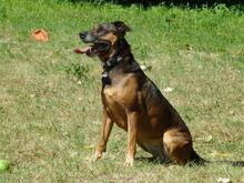 DIAMOND, Hund, Malinois in Speyer - Bild 8