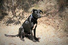 MORGAN, Hund, Labrador-Mix in Spanien - Bild 10