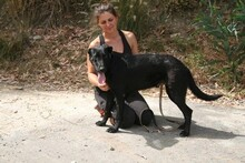 MORGAN, Hund, Labrador-Mix in Spanien - Bild 7
