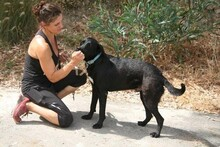 MORGAN, Hund, Labrador-Mix in Spanien - Bild 8