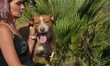 MACY, Hund, Podenco-Mix in Spanien - Bild 5