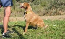 MACY, Hund, Podenco-Mix in Spanien - Bild 6