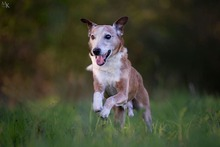 PICASSO, Hund, Whippet-Mix in Portugal - Bild 3