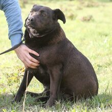 PLUTO, Hund, Labrador-Mix in Portugal - Bild 8