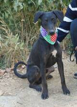 PAULO, Hund, Dobermann-Mix in Spanien - Bild 2