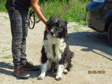 CHRIS, Hund, Mischlingshund in Bulgarien - Bild 5