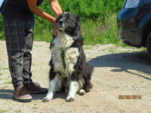 CHRIS, Hund, Mischlingshund in Bulgarien - Bild 8