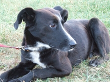 BYRON, Hund, Border Collie in Spanien - Bild 8