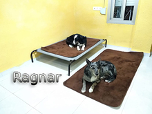 RAGNAR, Hund, Border Collie-Mix in Spanien - Bild 2