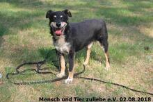 BILLY, Hund, Mischlingshund in Polen - Bild 1