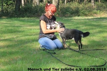 BILLY, Hund, Mischlingshund in Polen - Bild 2