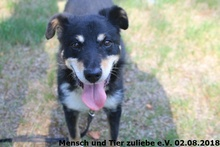 BILLY, Hund, Mischlingshund in Polen - Bild 3