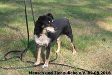 BILLY, Hund, Mischlingshund in Polen - Bild 4