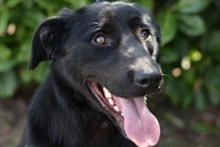 BUCK, Hund, Labrador Retriever in Kroatien - Bild 8