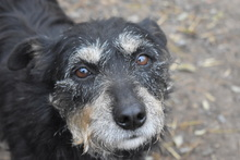 DORIS, Hund, Terrier-Mix in Ungarn - Bild 1