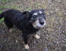 DORIS, Hund, Terrier-Mix in Ungarn - Bild 2