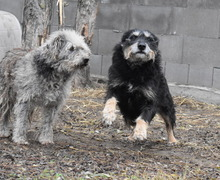 DORIS, Hund, Terrier-Mix in Ungarn - Bild 3
