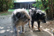 DORIS, Hund, Terrier-Mix in Ungarn - Bild 7