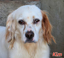 KIM, Hund, Irish Setter-Mix in Harsewinkel - Bild 2