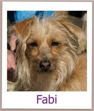 FABI, Hund, Terrier-Mix in Zypern