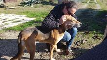 JOHNCOFFEE, Hund, Segugio Italiano-Mix in Italien - Bild 10