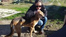 JOHNCOFFEE, Hund, Segugio Italiano-Mix in Italien - Bild 3